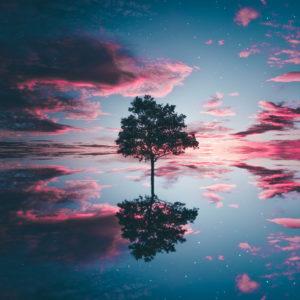 Tükröződő fa