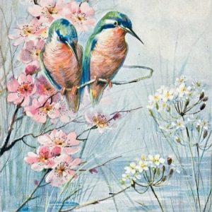 Kolibrik – Középhaladóknak