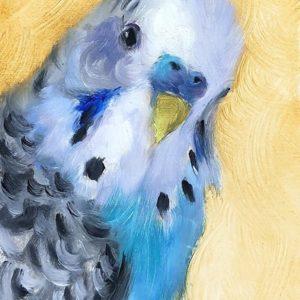 Fesd meg a saját hullámos papagájodat – Középhaladóknak
