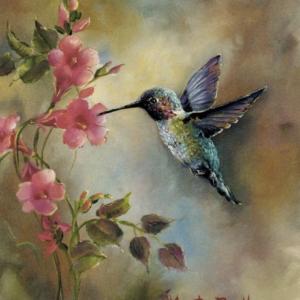 Kolibri a virággal – Kezdőknek