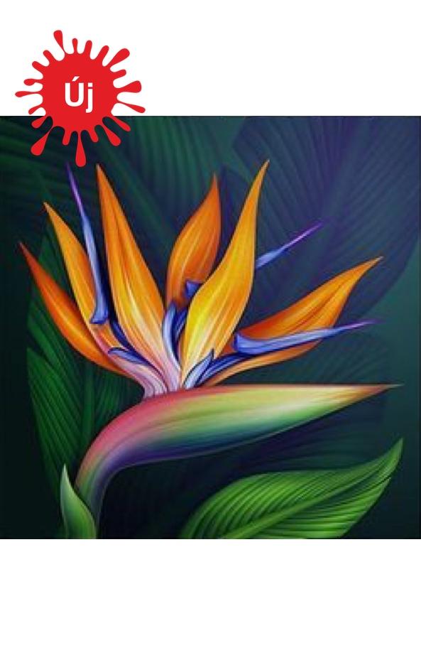 Egzotikus színes virág - YourArt - Otthoni élményfestő szett